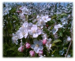 13-15 Frühling 1