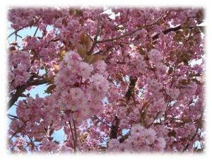 13-15 Frühling 2