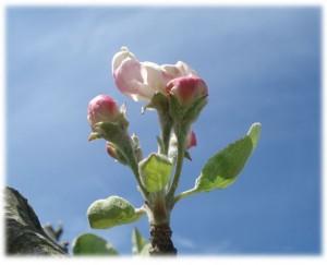 14-08 Frühling
